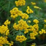 秋も花粉症があった!! 症状と時期、原因と対策は?
